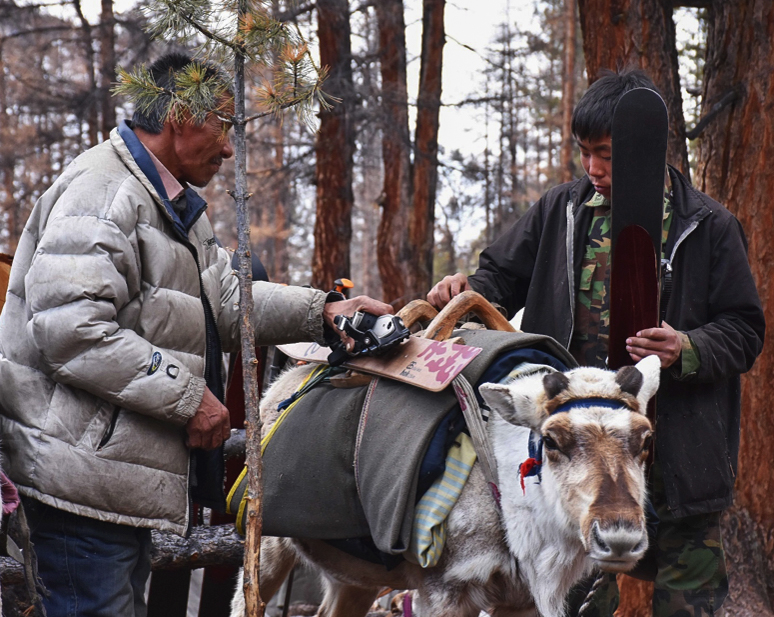 Bayendalai and Khosbileg packing Altai Hok skis onto a pack deer for an extended foray to search for lost reindeer.
